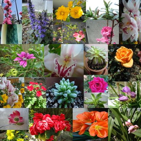 春花.jpg