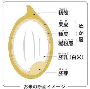 金芽米2.jpg