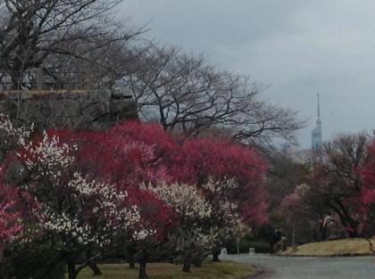 舞鶴公園.jpg